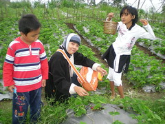 kebun strawbery