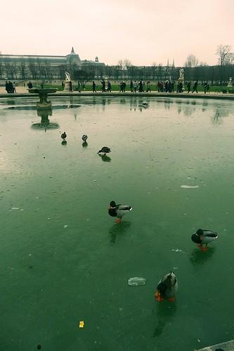 Froid de canard/Ducks on ice