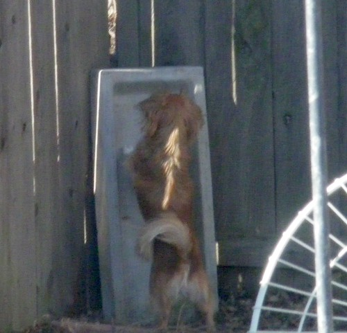 Sparky and the Squirrels 006