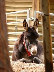 Donkey sanctuary by roseinthedark