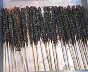 Centipedes on a stick