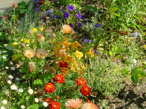 August Flowers
