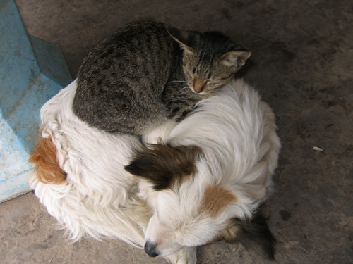 Interspecies cooperation