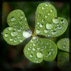 Luck of summer rain