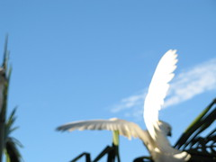 blurry wings and sky