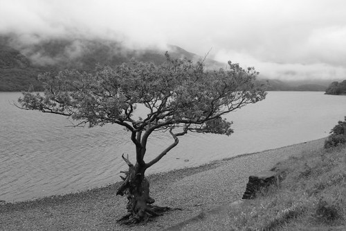 Tree at Loch Lomond