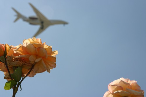 Roses & planes