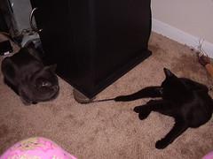 My two kitties - Phantom and Goliath
