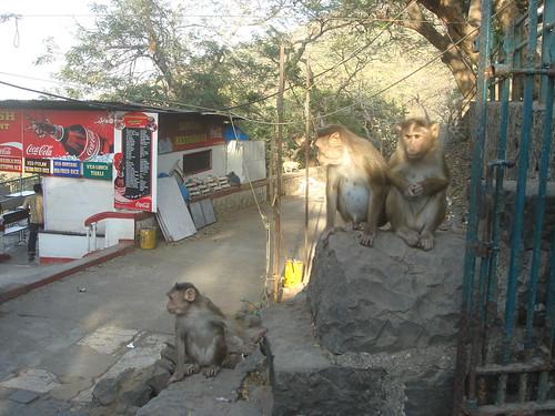 Elephanta Caves象窟1-32山林猴�