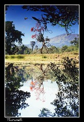 Reflections in Kalindi