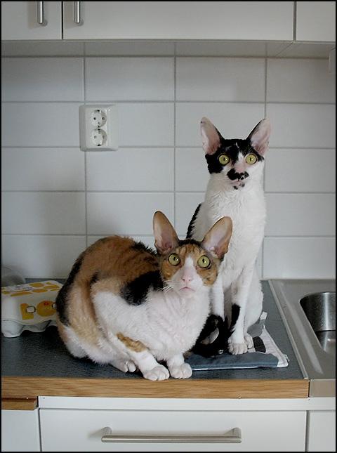 Nora & Greta