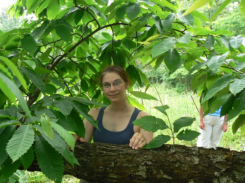 American Chestnut Field Day - ME!