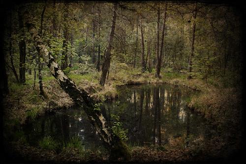Rêve de forêt