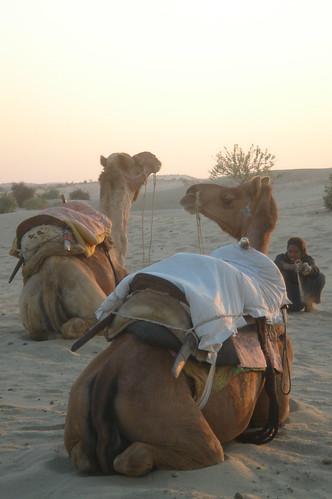 騎駱駝1-57
