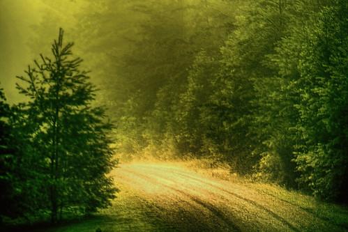 The Piney Narrows