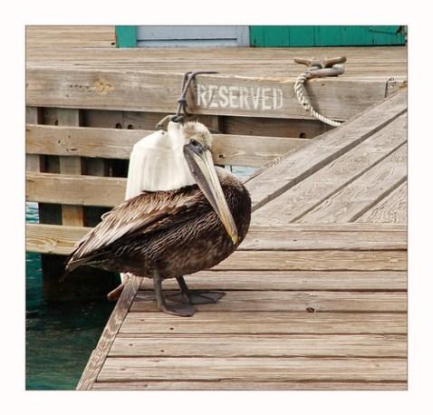 Pelican Reserve