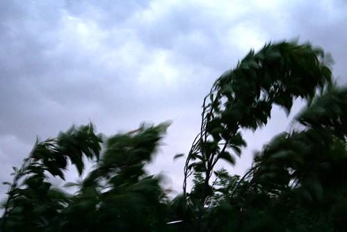 Like a tree in the wind III