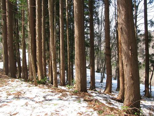 La foresta intorno a noi