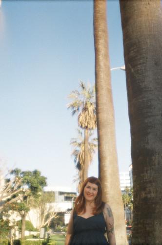 it's a palmy balmy day