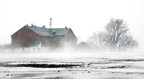 Fog in the Farm