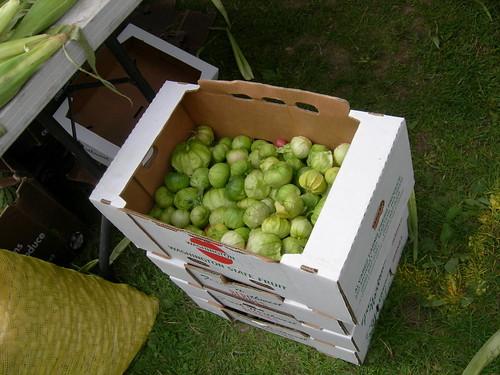 Box O' Tomatillos
