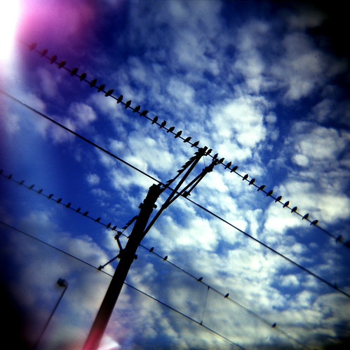 Starlings at twilight