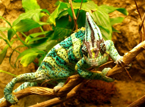 Chameleon Leadership