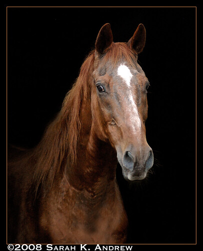 Royal, a 31 year old Thoroughbred