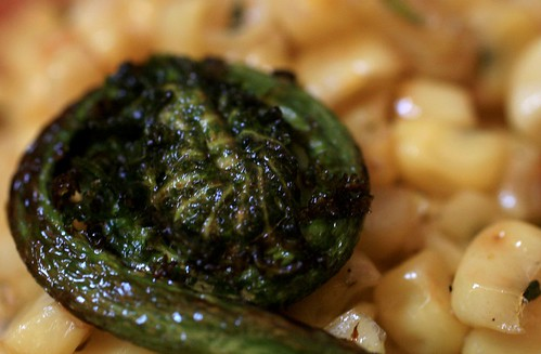 Cooked fiddlehead