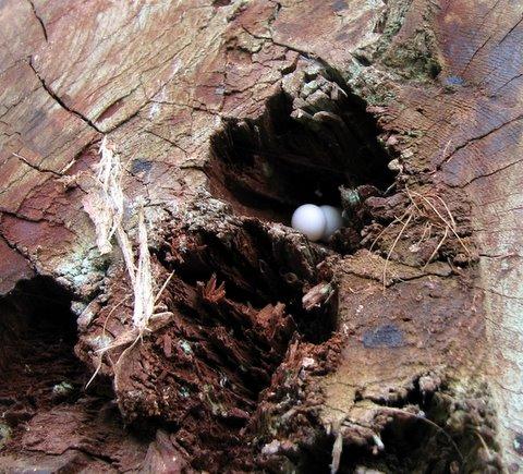 gecko eggs lalbagh 220308