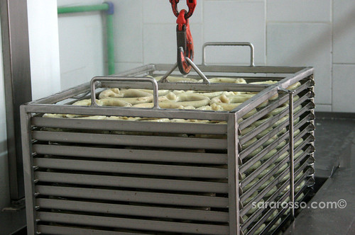 Scaldatelli being boiled in a Pugliese Tarallificio
