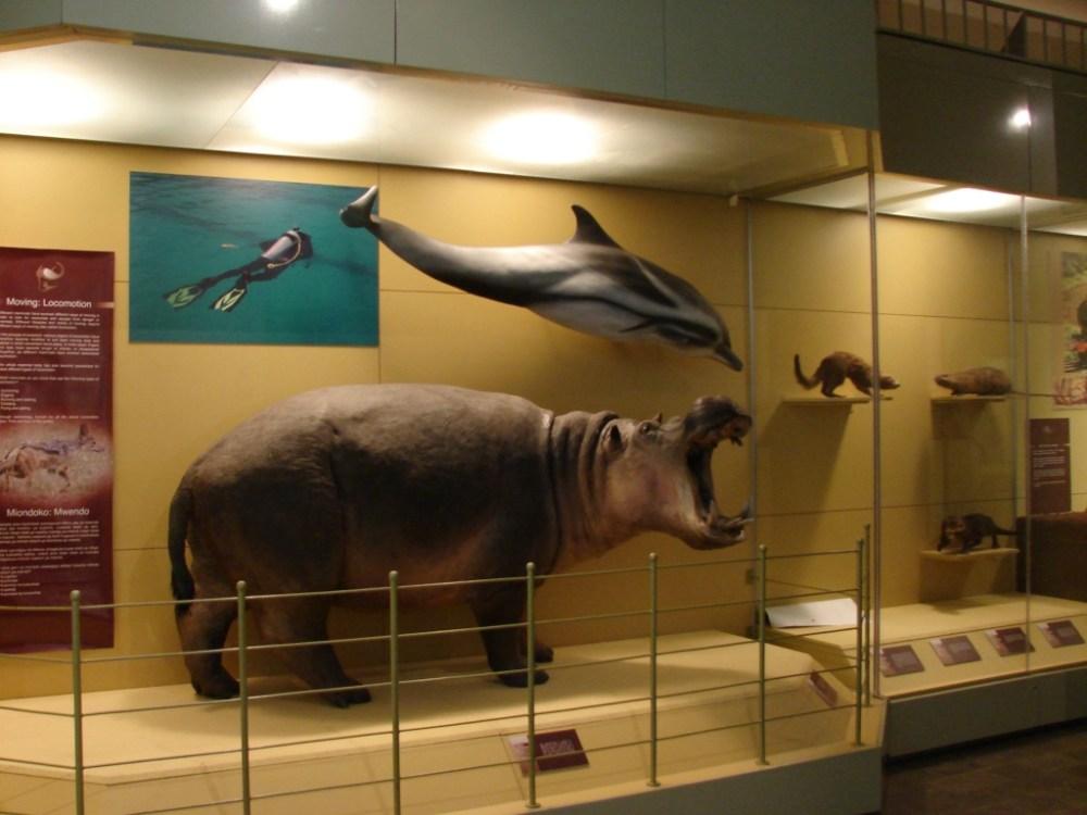 Nairobi National Museum (3/6)