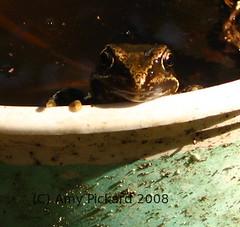 frog tub 3