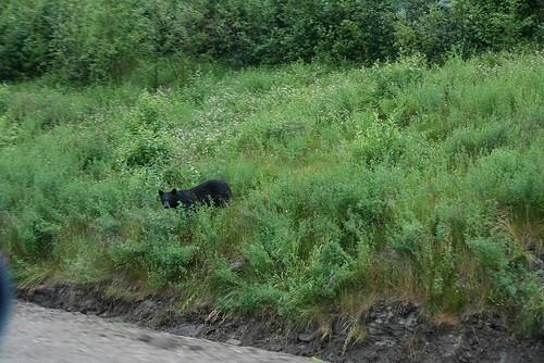 A black bear! by you.