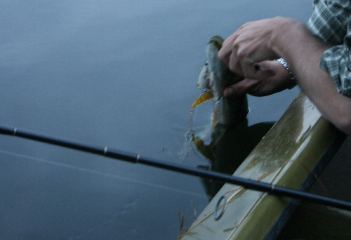 Removing a lure from a pike