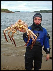 WASD42: Kamchatka crab
