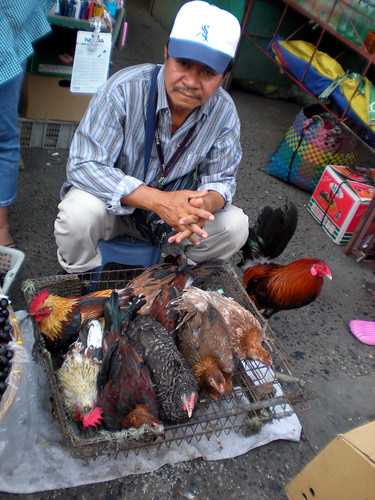 Los Angeles, Pampanga live chicken rooster free range street  sidewalk vendor rural Pinoy Filipino Pilipino Buhay  people pictures photos life Philippinen  菲律宾  菲律賓  필리핀(공화�) Philippines