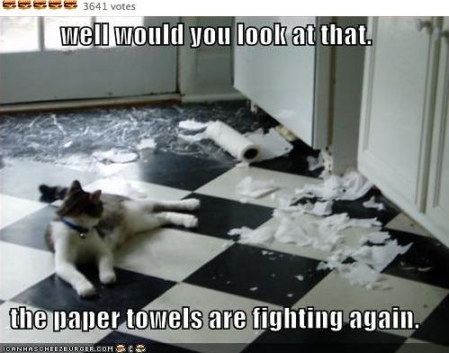papertowelsfighting
