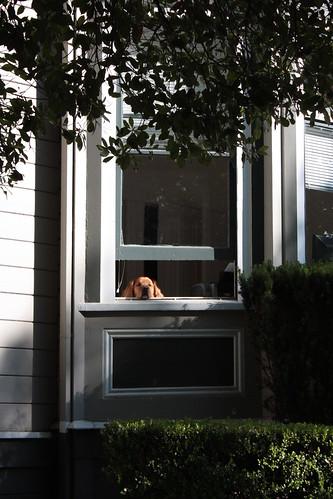 Silicon Valley Dog