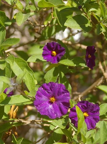 purple flowery things