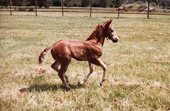 Young Horse 3