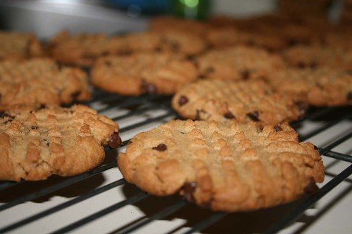 Peanut Butter cookies, with chocolate chips.