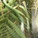 Big Nosed Snake -- DSCN4483