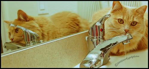 Olivia in sink