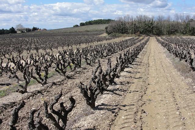Bush Vines