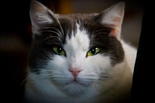 Occhi di gatta