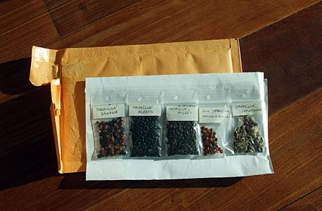 sementes de maracujás e uva-japonesa