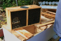Bees in a Box