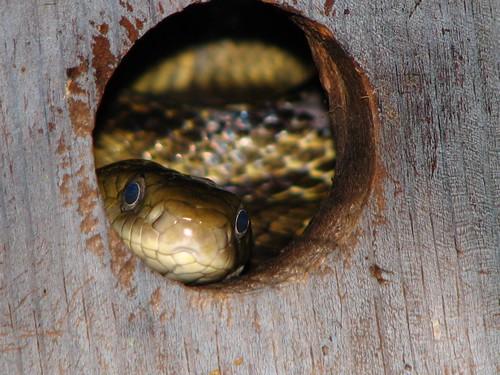 Snake in the bird house