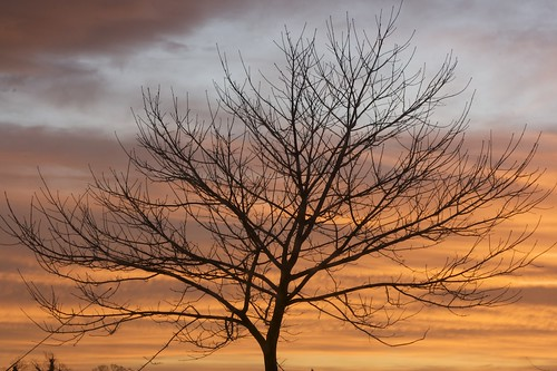 Musselburgh Sunrise with Tree